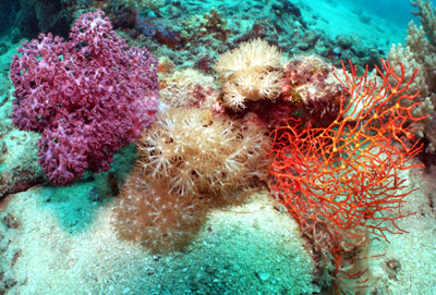 Soft Corals Of The Great Barrier Reef Eatlas