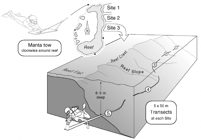 Schematic arrangement of reefs surveys