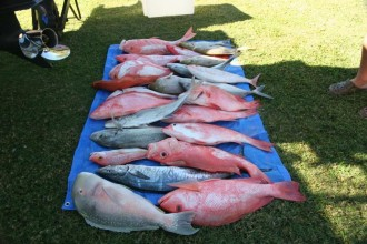 Mixed catch from deep shoals of tropical snappers, coral trout, trevallies, Tuskfish, spangled emperor  and Spanish mackerel