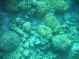 Dislodgement of massive corals