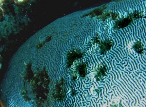Scarring of coral surfaces by the movement of debris
