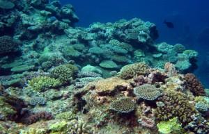Coral sea, crest habitat