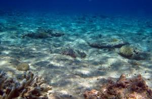 Coral sea habitat