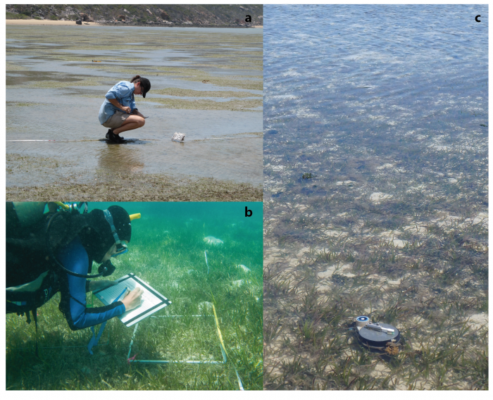 Monitoring of Seagrass Meadows of the inshore Great Barrier Reef