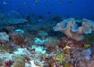 Oceanic shoal coral diversity