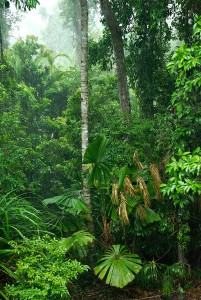 Rainforests of NE Queensland