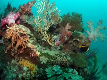 High diversity reef