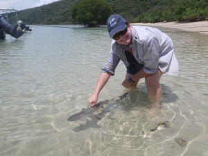 Release of a juvenile blacktip reef shark at Orpheus Island