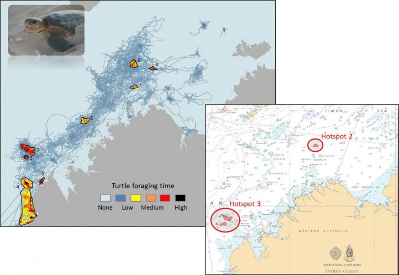 Hotspots of flatback turtle foraging time in NW Australia's Kimberley region, 2008-2010.