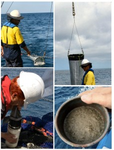 Process of collecting samples using a plankton net