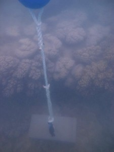 Cherepo Island - Torres Strait Temperature Logger (Flat Logger: CHEREPOFL1)