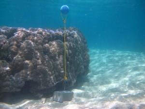 Mer Island - Torres Strait Temperature Logger (Flat Logger: MERFL1)