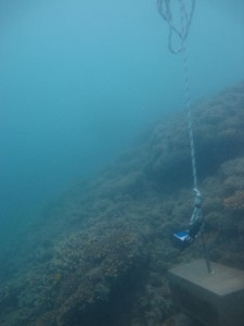 Mabuiag Island - Torres Strait Temperature Logger (Slope Logger: MABUIAGSL1)