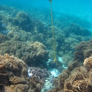Mer Island - Temperature logger