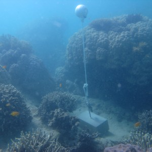 Woiz Reef - Temperature Logger
