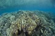 Stark Reef