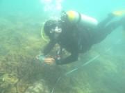 Inshore Coral Monitoring