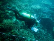 Visual fish census data collection AIMS reef monitoring