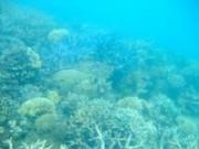 GBR Corals