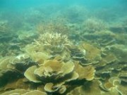 Middle reef coral