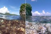 Bleaching in American Samoa