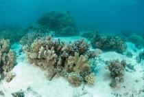Hard coral on a sandy bottom