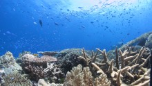 Structurally complex and diverse coral reef environments such as this may become less common if pH levels continue to fall, which has seriously implications for marine fauna that rely on the shelter that these habitats provide