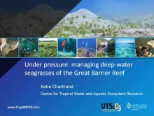 Under pressure: Managing deep-water seagrasses of the Great Barrier Reef Video preview image