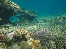Prolifering branching corals at Broomfield Reef
