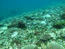 Coral recovering in Wreck Island Reef after Tropical Cyclone Hamish