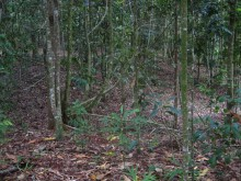 Replanted rainforest patch - interior vegetation