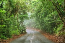 Impact of roads in the Wet Tropics World Heritage Area (WTWHA)