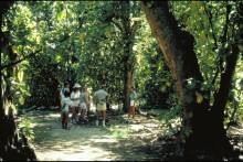Rainforest tours in the Wet Tropics World Heritage Area (WTWHA)