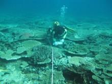 Torres Strait reefs assessment