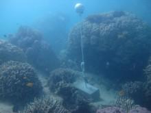 Woiz Reef