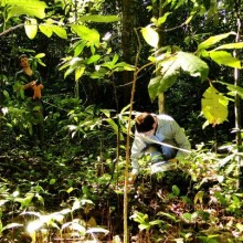 Fungi survey in high altitude tropical rainforests, Wet Tropics