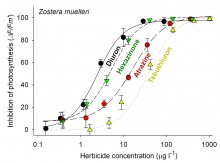Toxicity of four herbicides to the seagrass Zostera muelleri