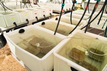 Water quality experiments on seagrasses