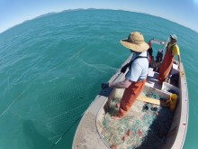 Survey team checking the gillnet for sharks