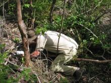 Leaf litter assessment in the rainforest