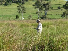 Field surveys of vegetation between Chumbrumba swamp and Mabi rainforest