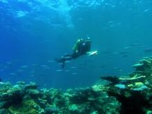 Underwater visual survey