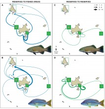 Dispersal patterns of juvenile fish from Keppel Island group marine reserves
