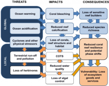 Linkage of coral reefs threats