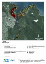 Map of dominant seagrass species in Cairns area
