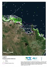Map of seagrass around Edgecumbe Bay Dugong Protection Area