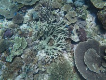 High coral cover - downward view