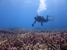 Photo transect on Fairfax reef - October 2015