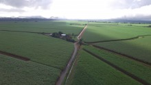Far North Queensland cane fields aerial shot