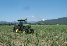 Fertilising sugarcane
